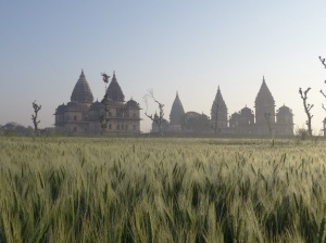 A sunrise walk through wheat fields with a glorious misty view of the temples